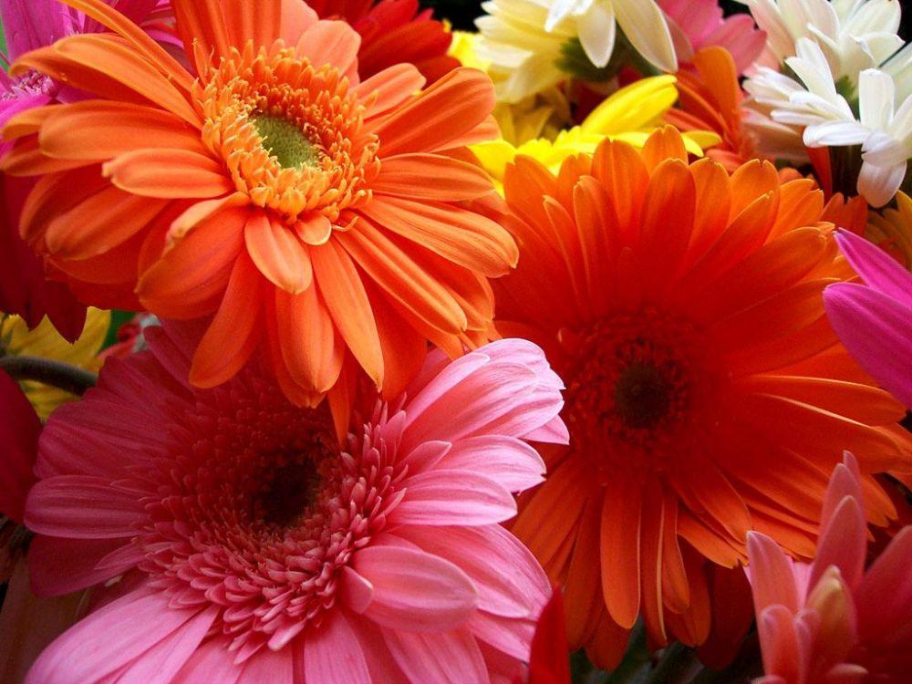 Цветы с доставкой из ФлораМаркт